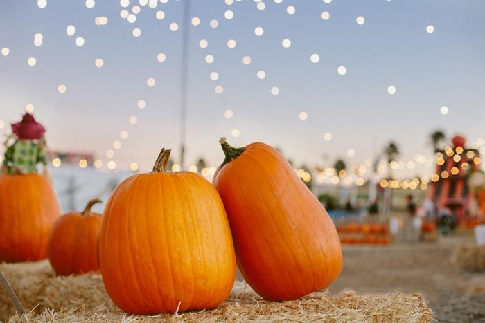 las vegas stu millers pumpkin patch halloween photography 01