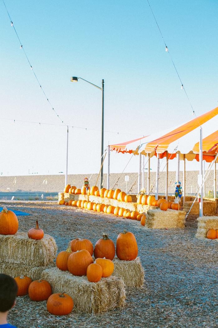 las vegas stu millers pumpkin patch halloween photography 03