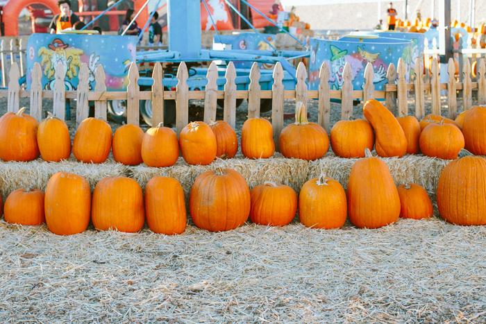 las vegas stu millers pumpkin patch halloween photography 07