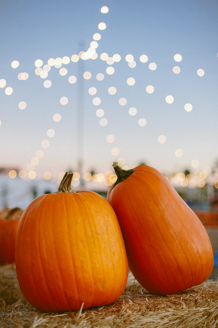 las vegas stu millers pumpkin patch halloween photography 13