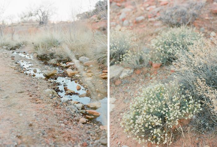 red rock state park desert life film 3