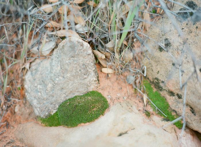 red rock state park desert life film 7