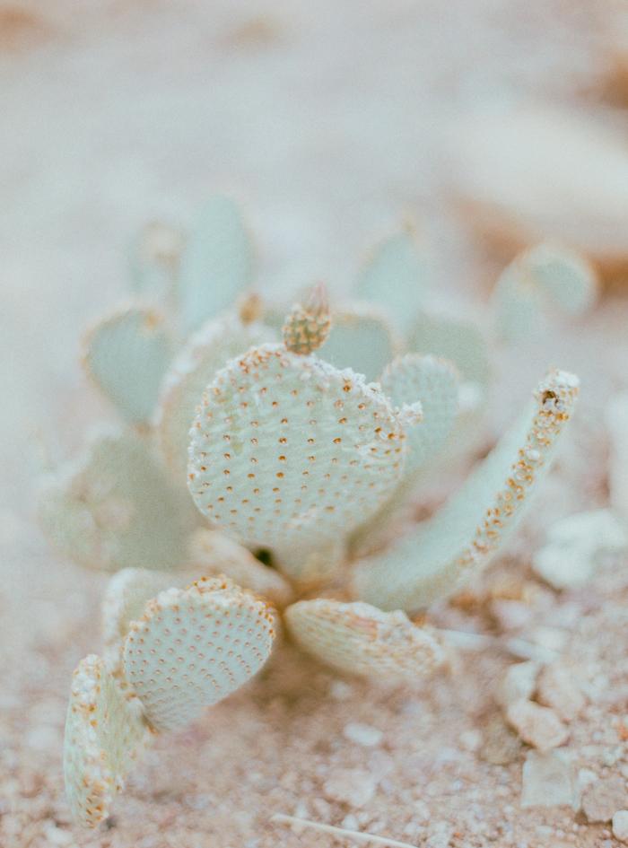 nevada desert expired slide film 15