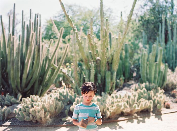 desert botanical garden phoenix arizona 1
