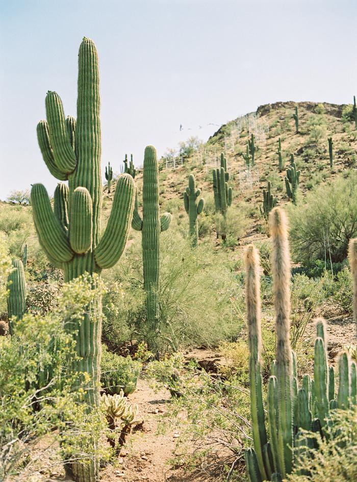desert botanical garden phoenix arizona 2