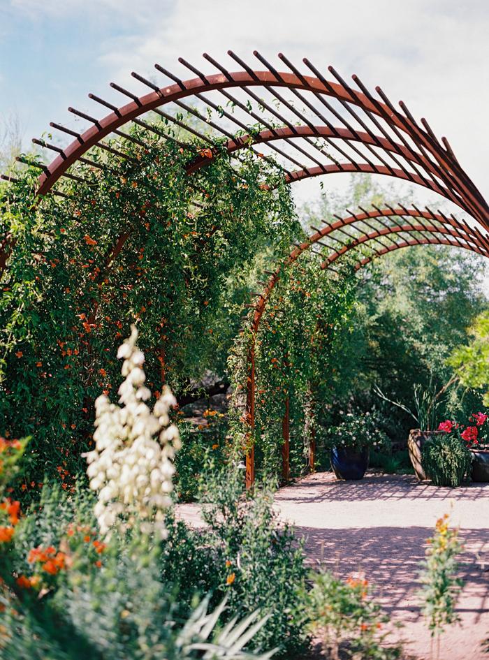 desert botanical garden phoenix arizona 3