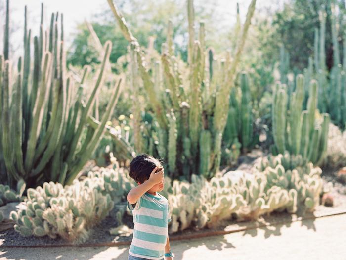 desert botanical garden phoenix arizona 10