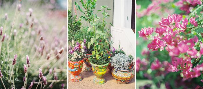 desert botanical garden phoenix arizona 13