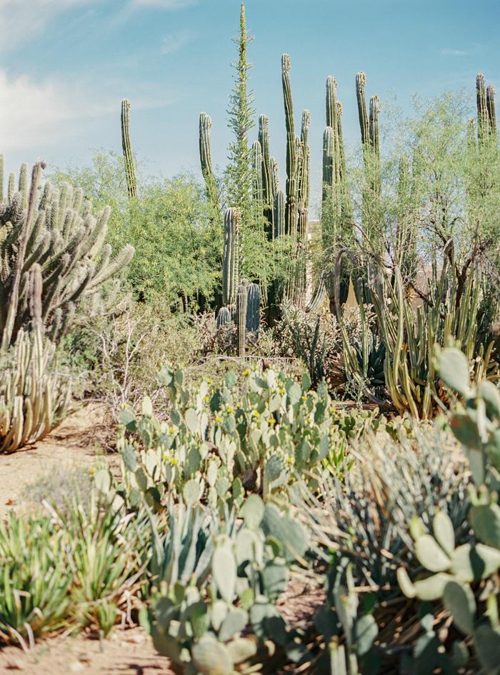 desert botanical garden phoenix arizona 17