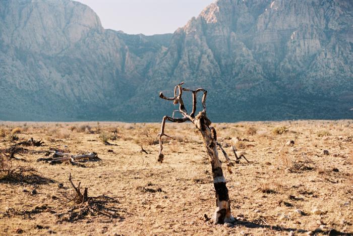 desert kids on film 2