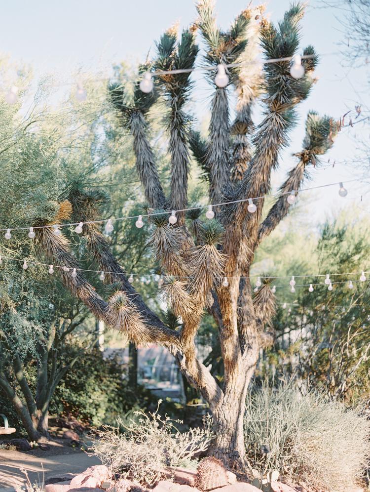 springs preserve cactus alley wedding