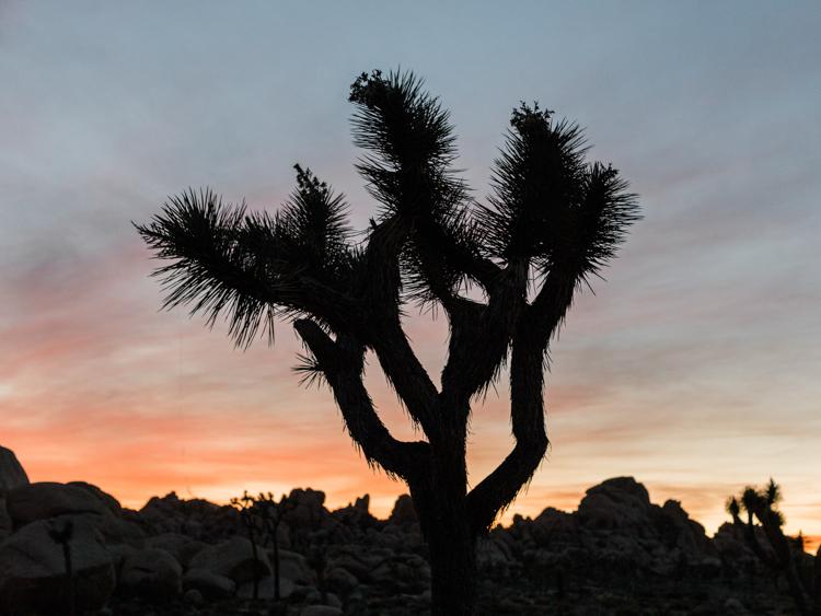 joshua tree national park during sunset photography