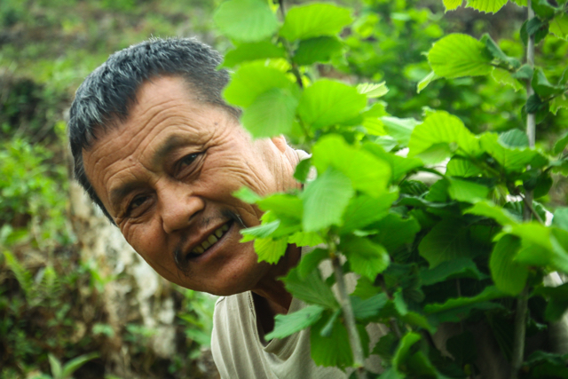 After retiring from the Bhutanese Army, Sangay was determined to return home and work the soil of his family farm. He explored new crop options, such as onions and tomatoes, and then heard about hazelnuts. Their vigorousness and ease to grow convinced him this was a good crop.  More...