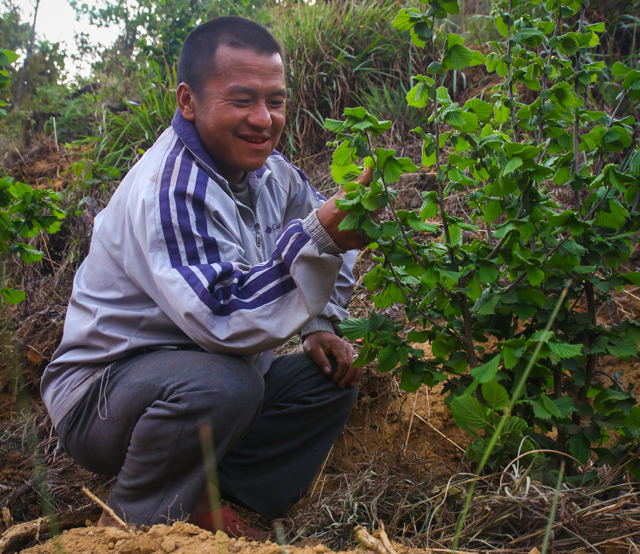 """Tashi Wangdi planted two acres of hazelnut trees on his family's farm, with the hope that hazelnuts can support his children's education: """"I dream for my children to go to college and get degrees. Life is very hard when you can't manage your financial situation.""""  More..."""