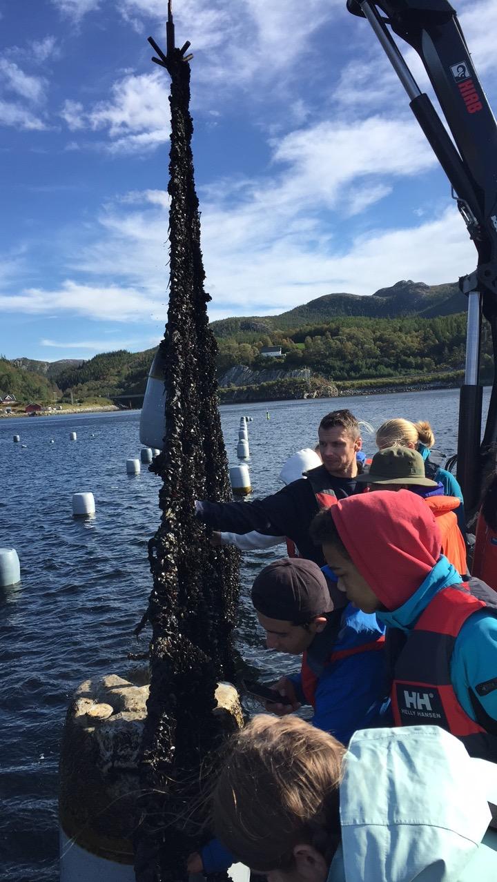 Her er vi ute på anlegget til Norge Skjell og får se hvordan blåskjell dyrkes frem.