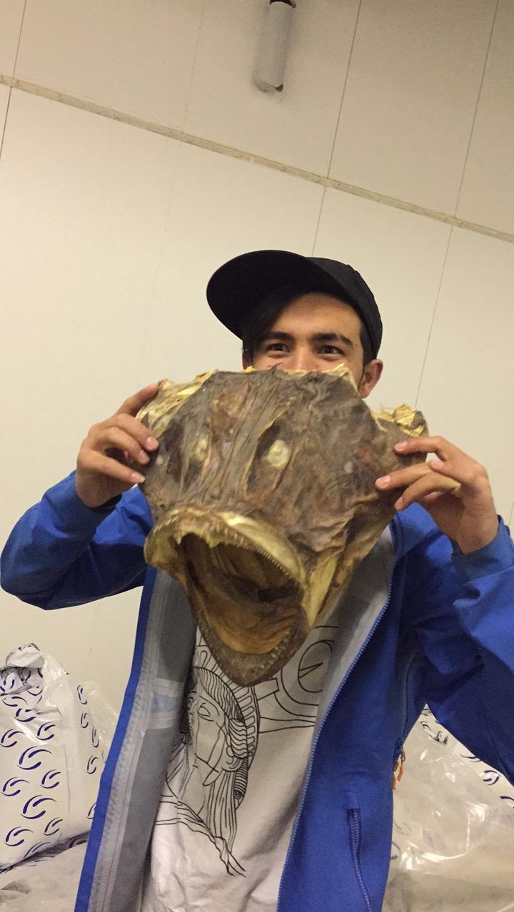 På refsnes fiskeindustri med et breiflabb hode...