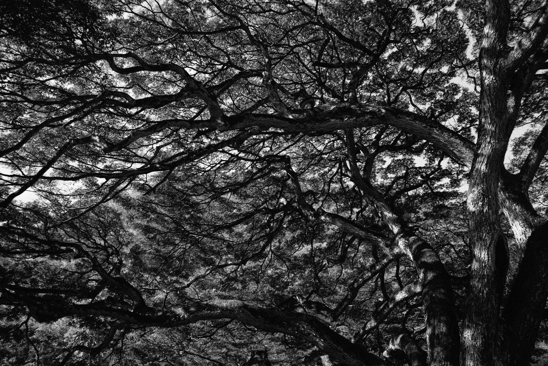 Leica-1001982.jpg