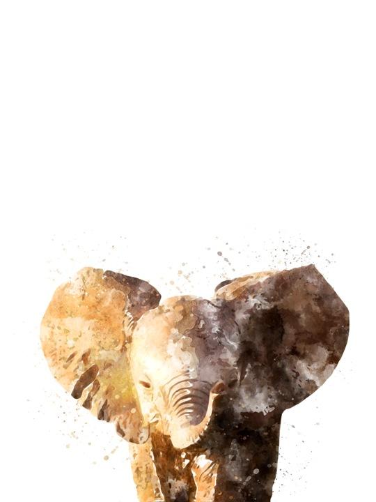 elephant small.jpg