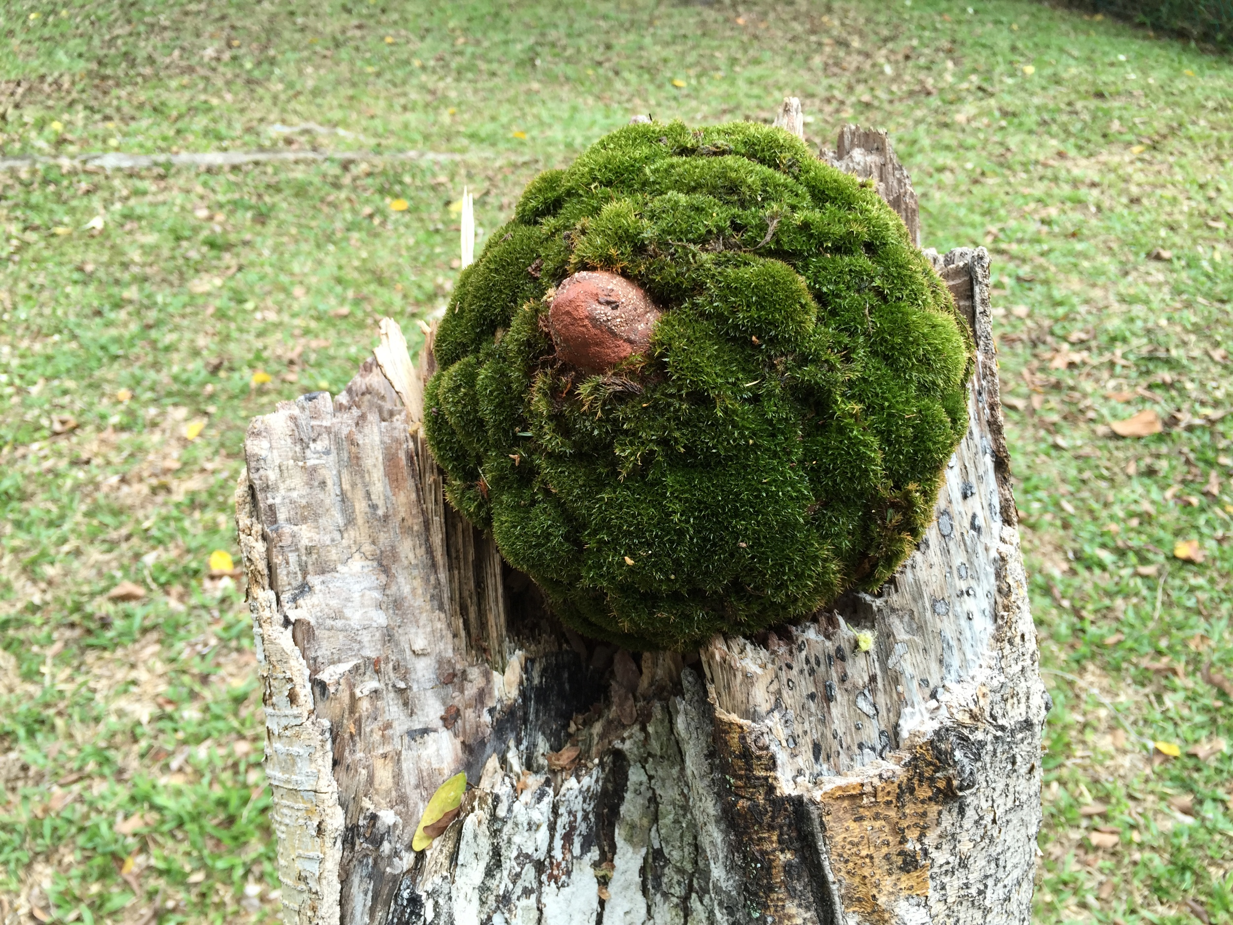 Untitled Moss Dimension Variable 2015