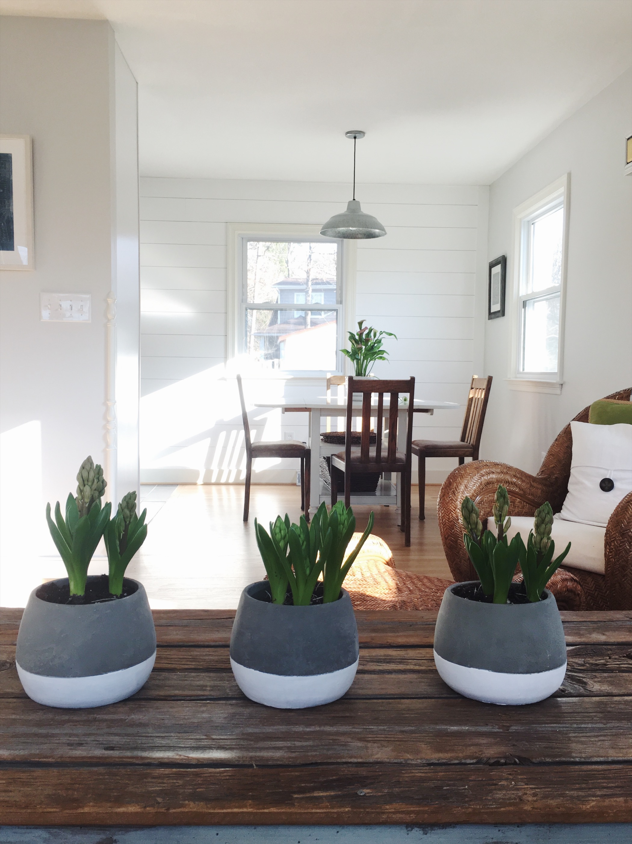 Three little pots making our house feel so springy!