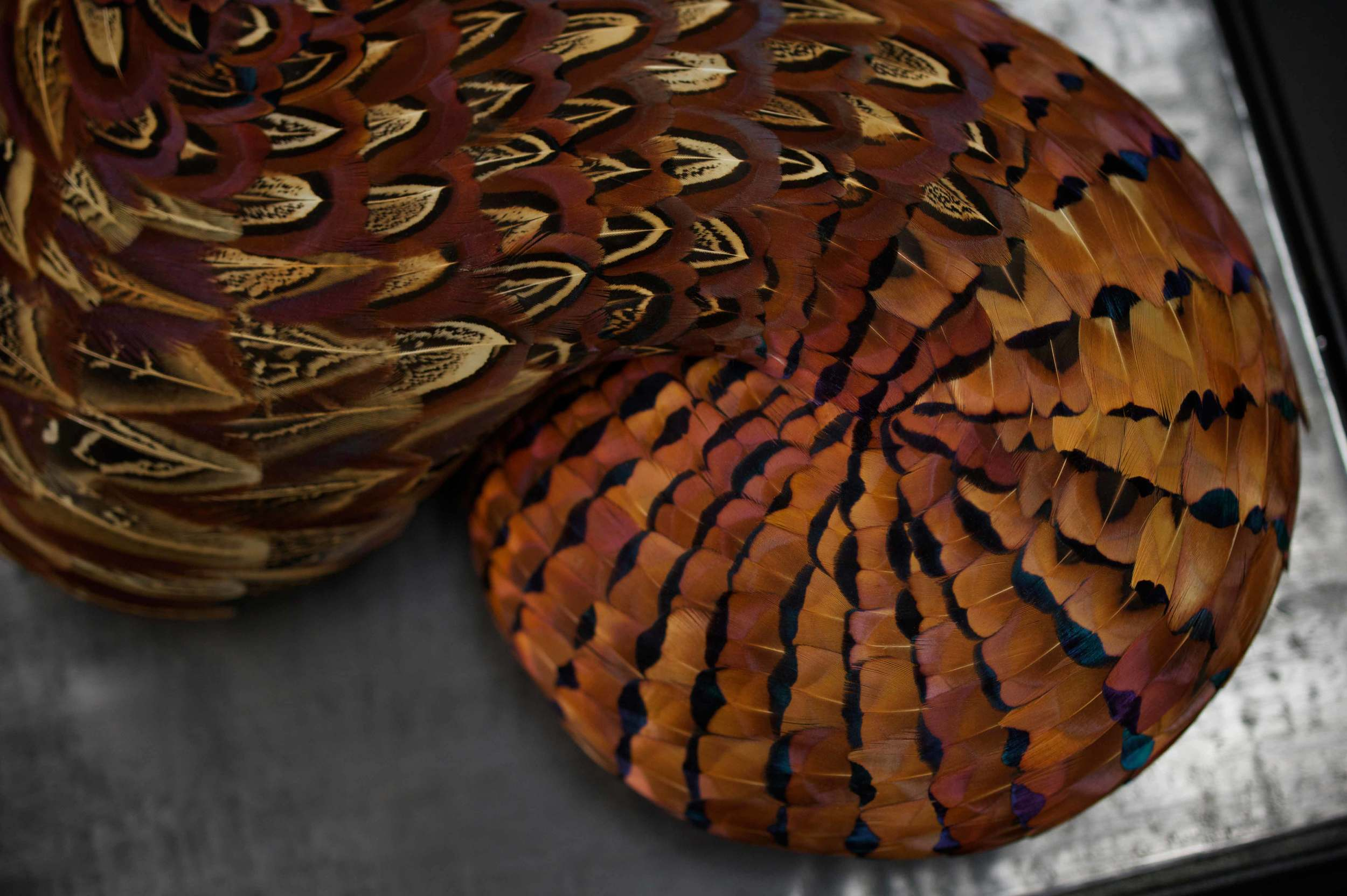 HASP - Photo JP Bland (5).jpg