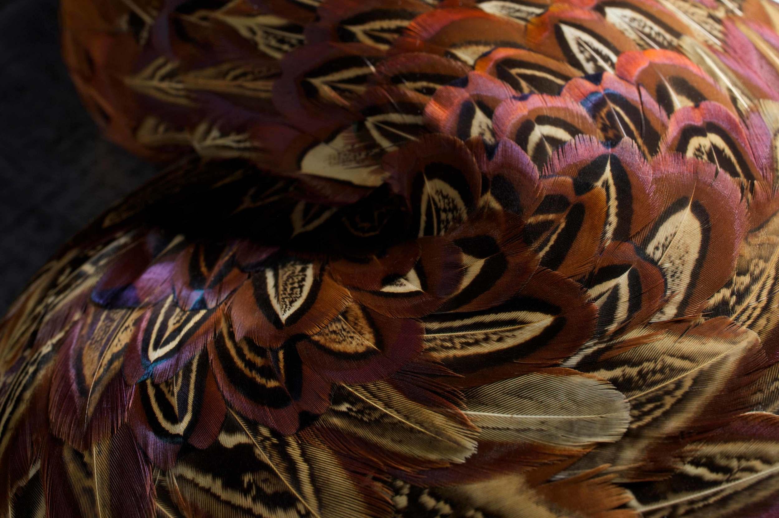 HASP - Photo JP Bland (4).jpg