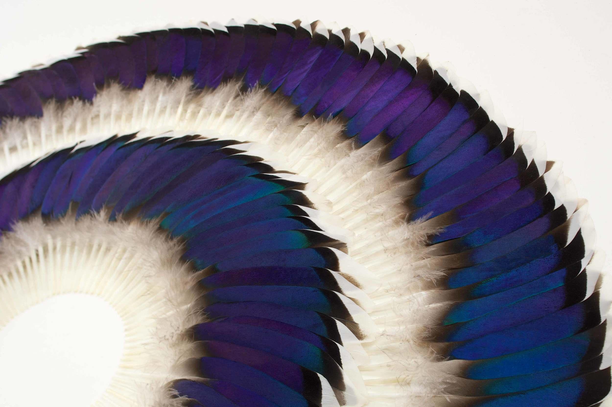 SWELL (detail) - Photo JP Bland.jpg
