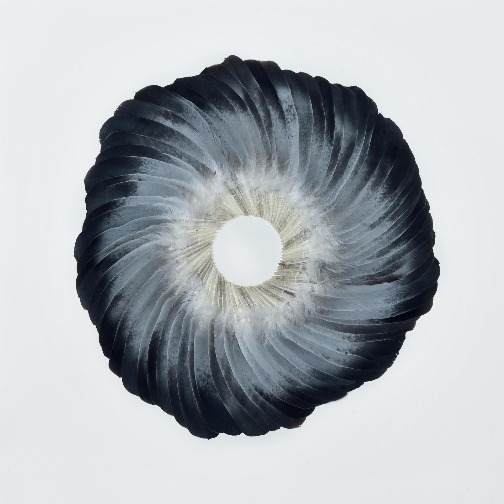 Sepal II, 2011, Kate MccGwire