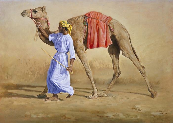 Omani Racing Camel