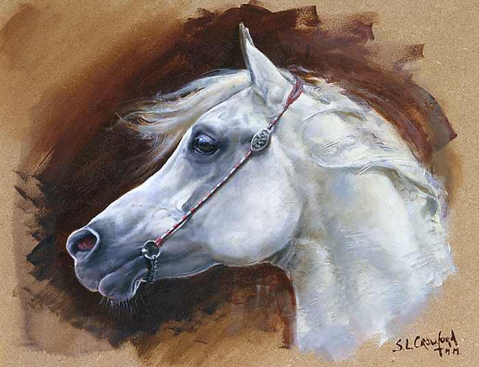 Arab Horses Head