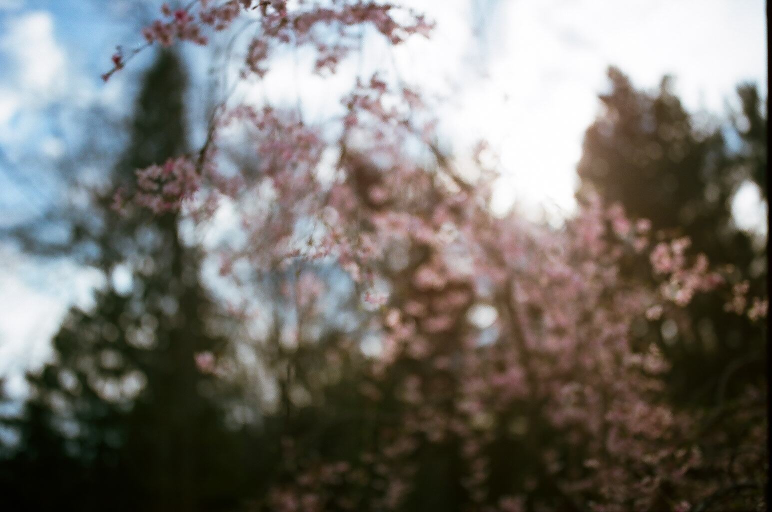 easter and hello spring (1 of 36).JPG