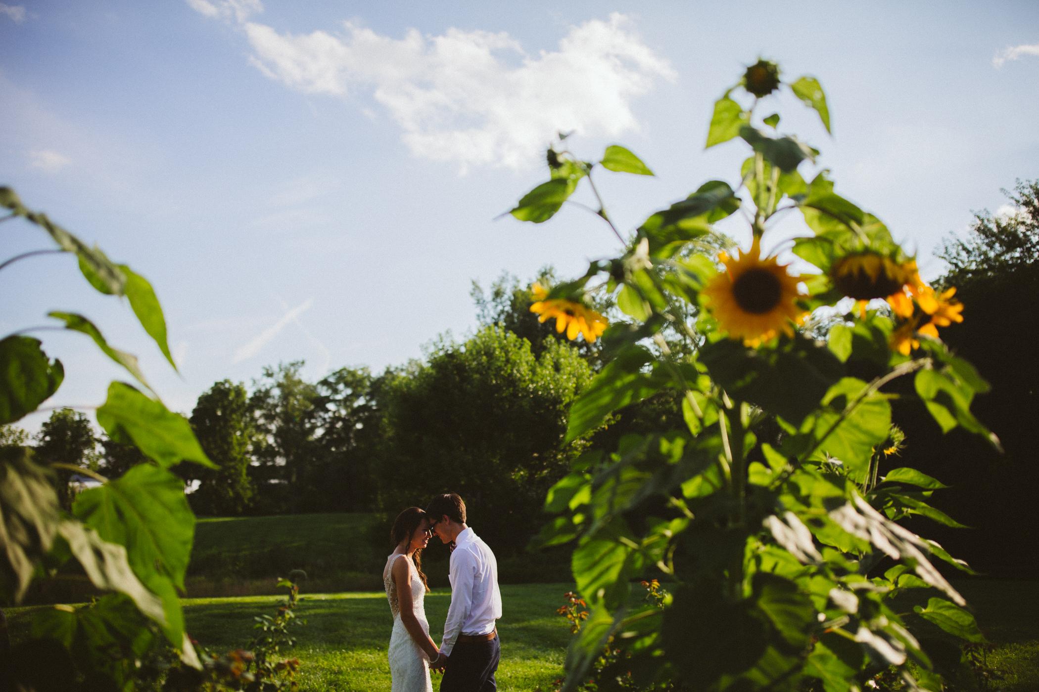 jorgensen sunflowers-1.jpg