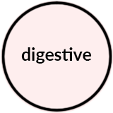 Digestive.png