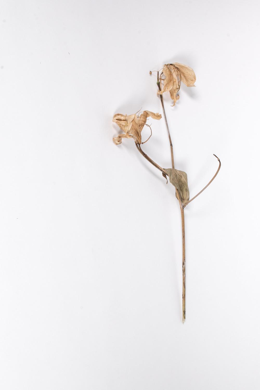 Flower_Sculptures_16_1.JPG
