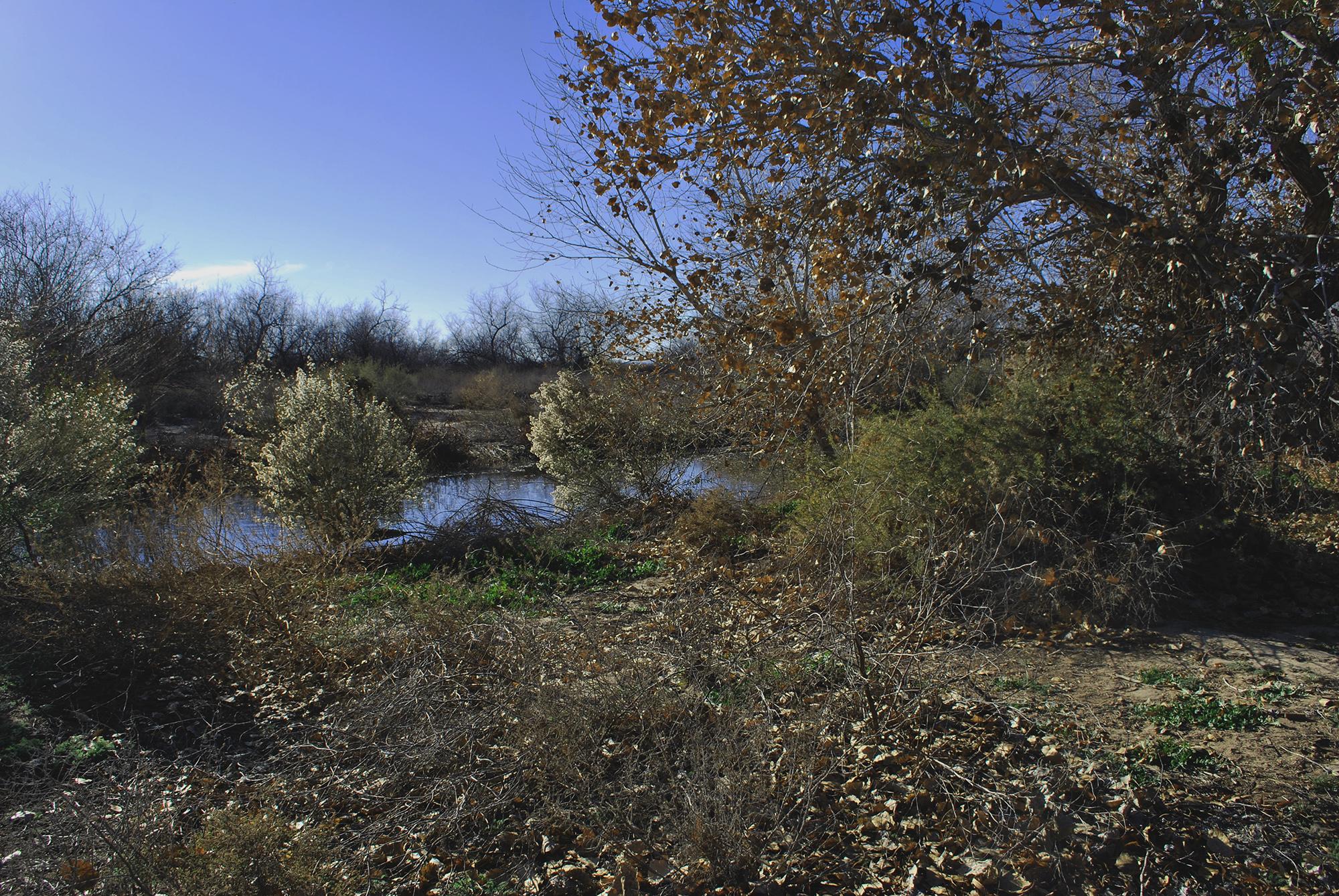 Rio Bosque Wetlands5.JPG