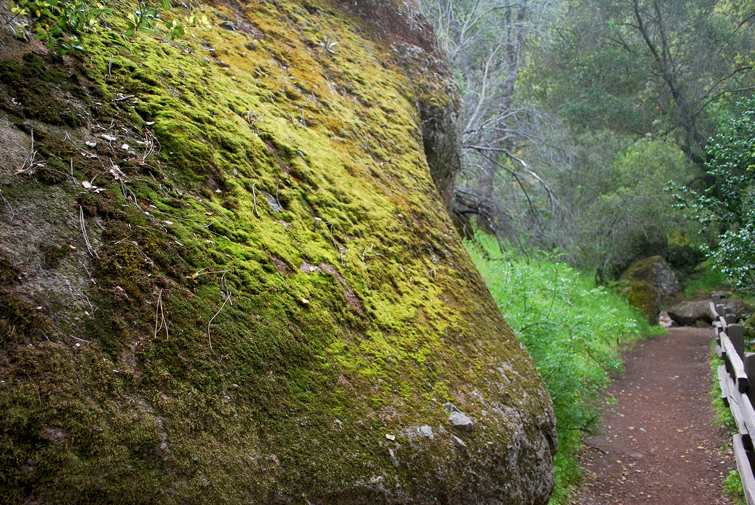 Pinnacles Nationa Park textures.jpg