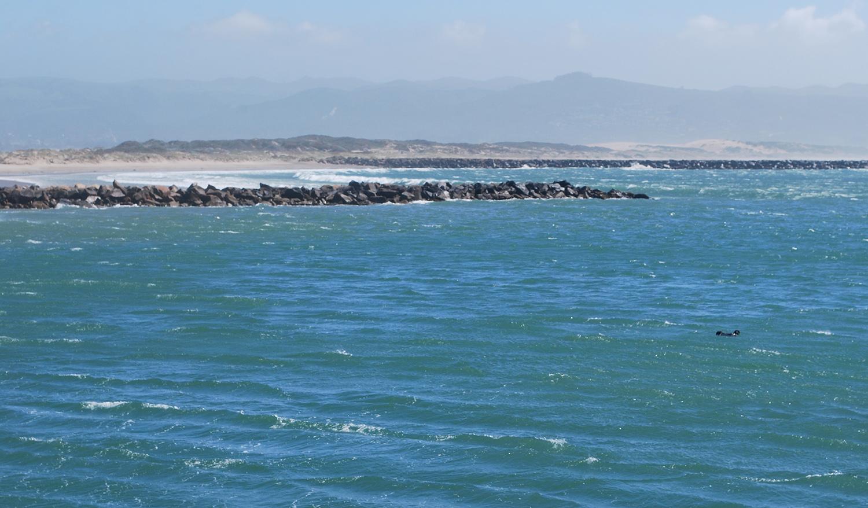 Morro Bay otters.JPG