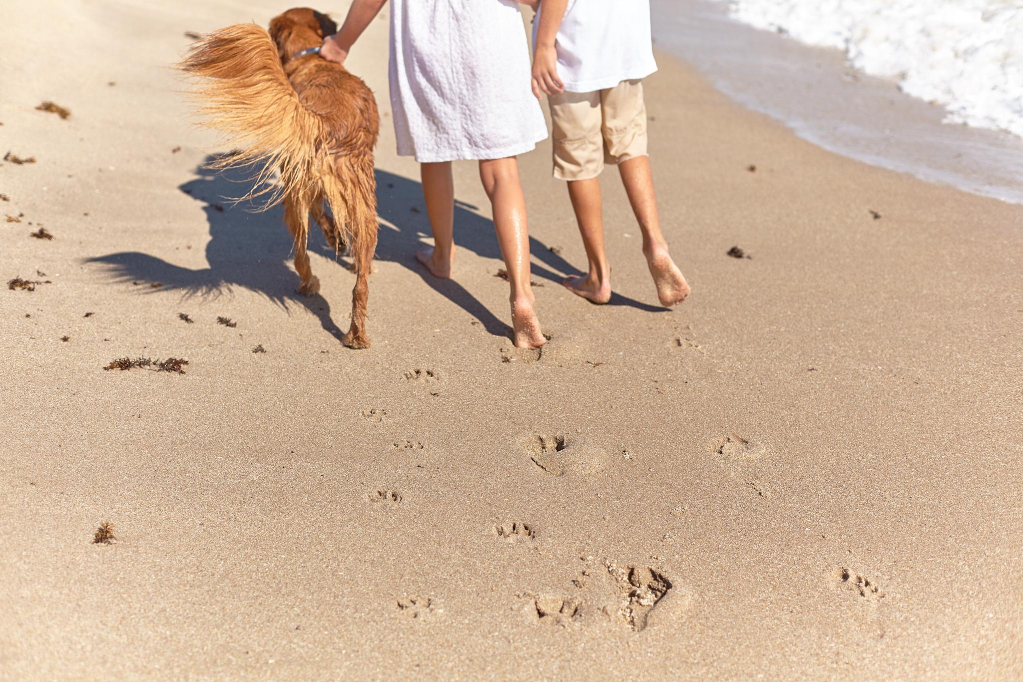 boprey-pet-photography-portrait-nyc_10.jpg
