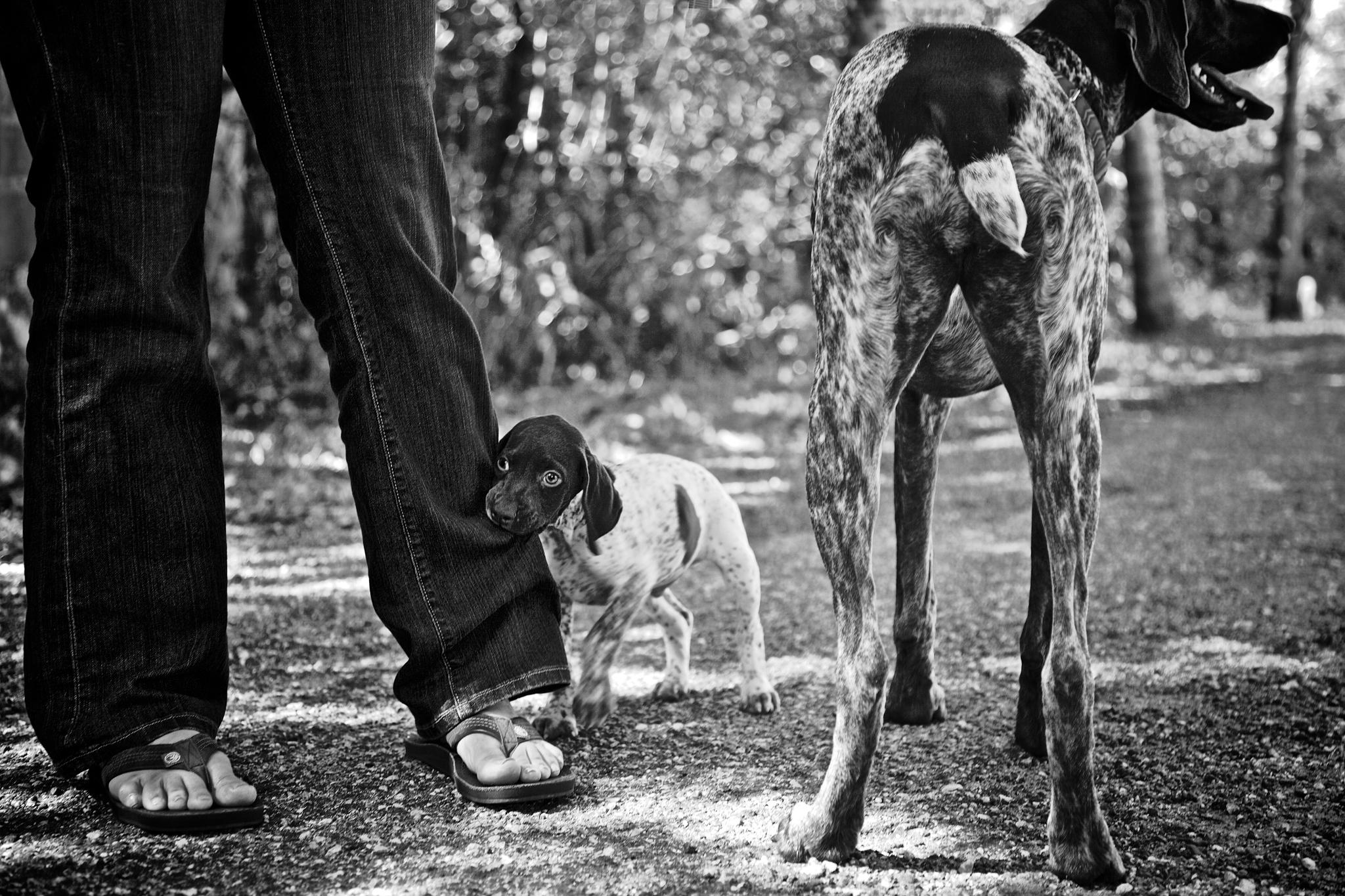 boprey-pet-photography-portrait-nyc_11.jpg