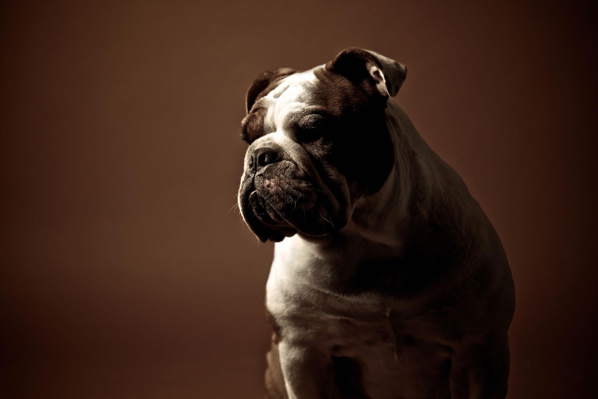 boprey-pet-photography-studio-nyc_6.jpg