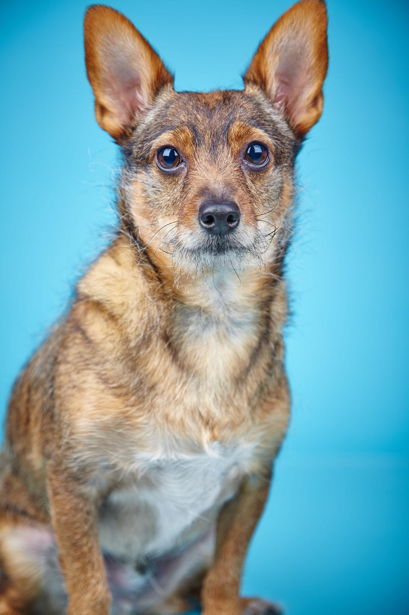 boprey-pet-photography-studio-nyc_9.jpg