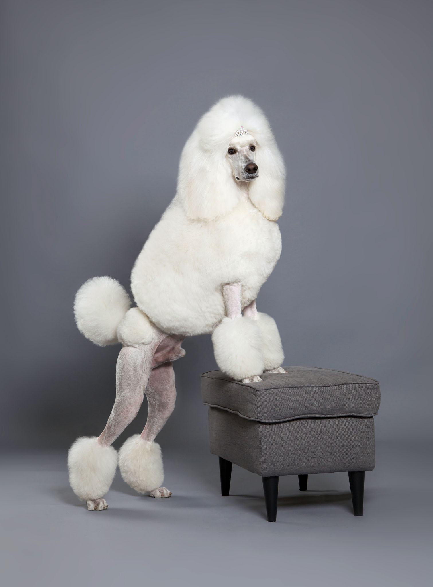 boprey-pet-photography-studio-nyc_10.jpg
