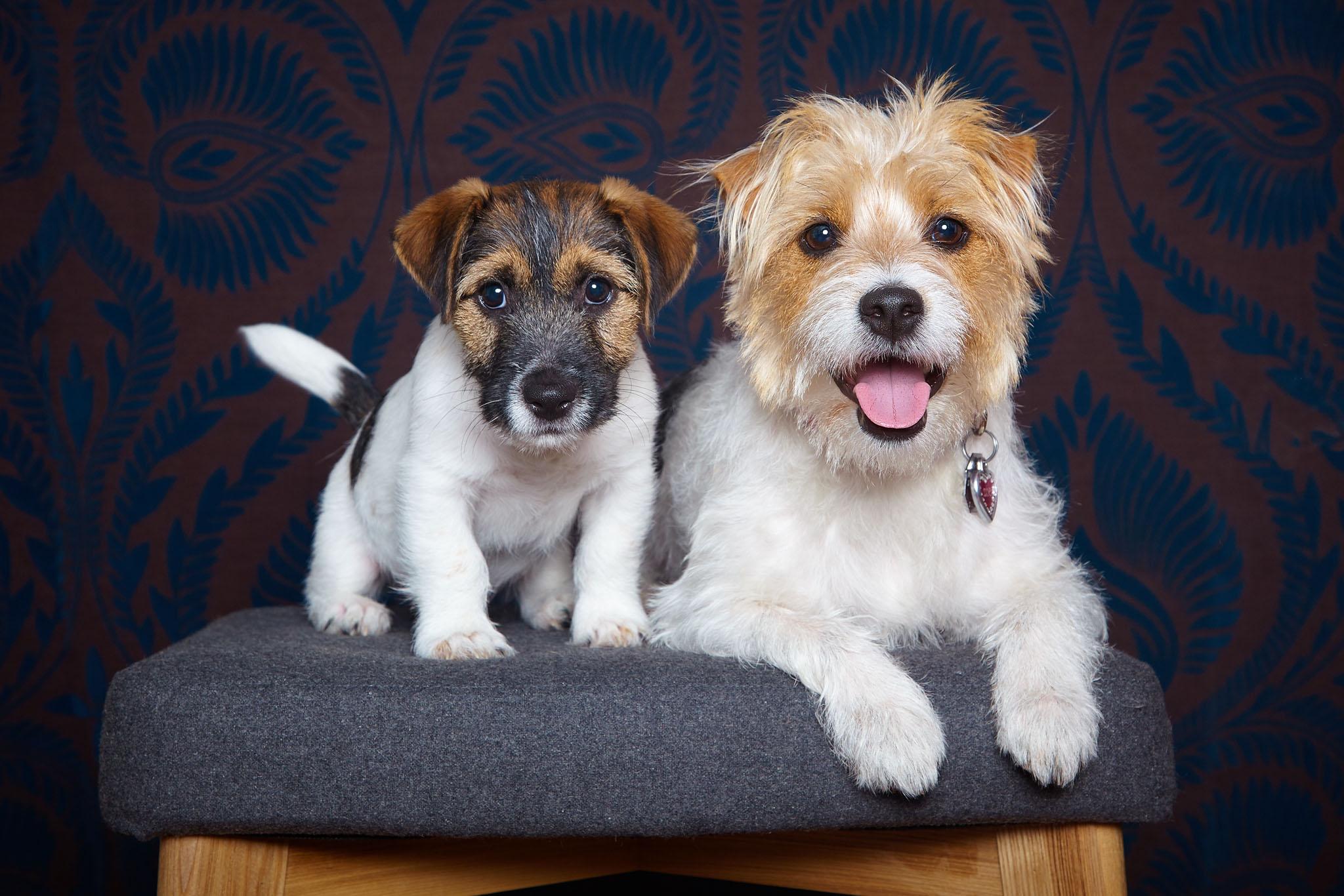 boprey-pet-photography-studio-nyc_16.jpg
