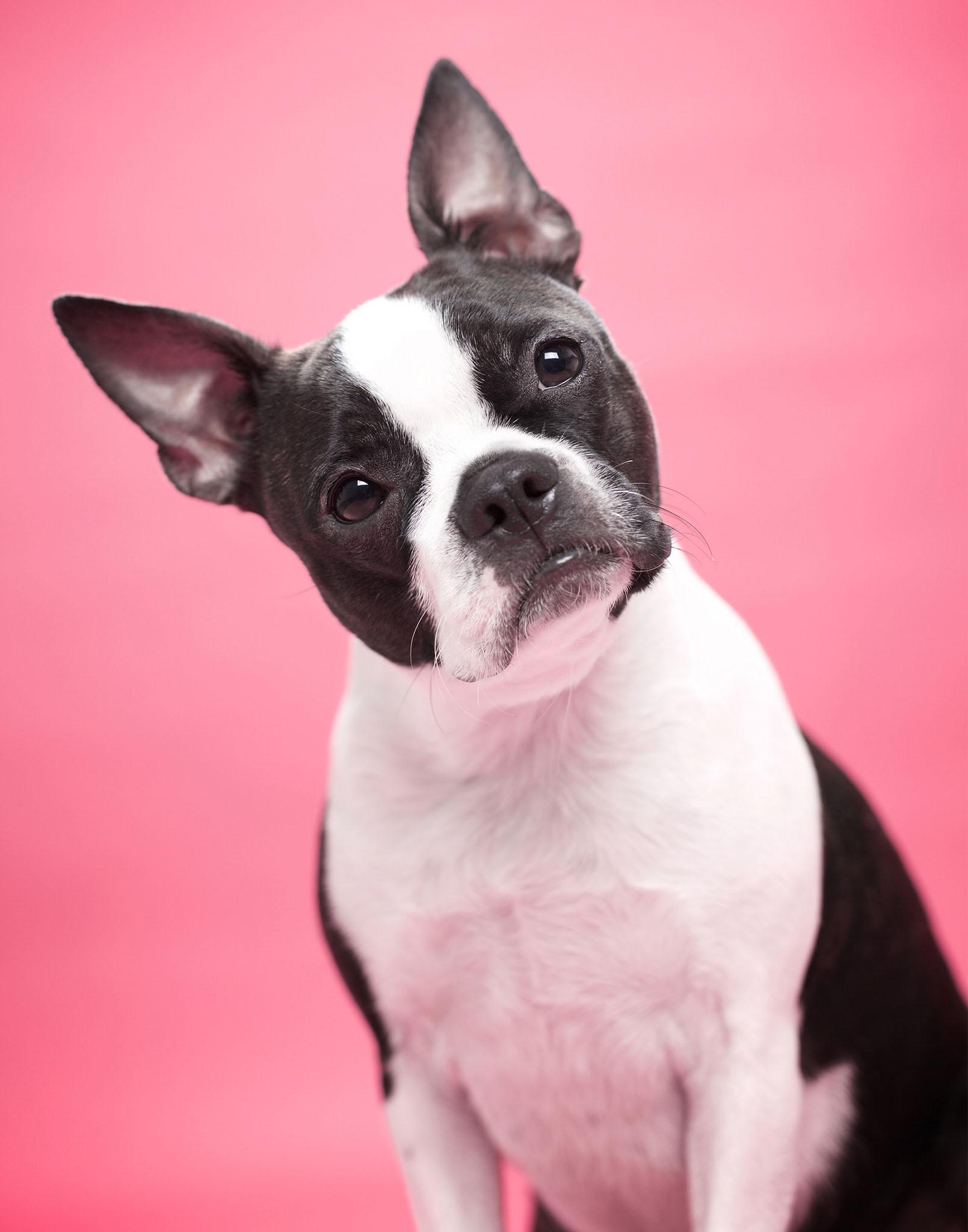 boprey-pet-photography-studio-nyc_18.jpg