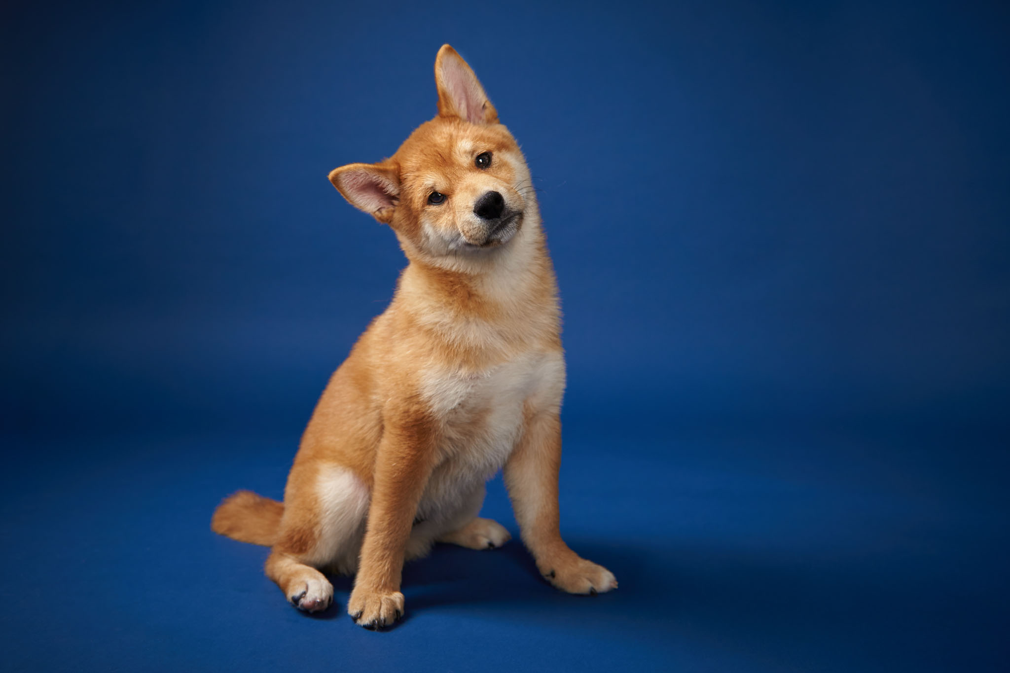 boprey-pet-photography-studio-nyc_21.jpg
