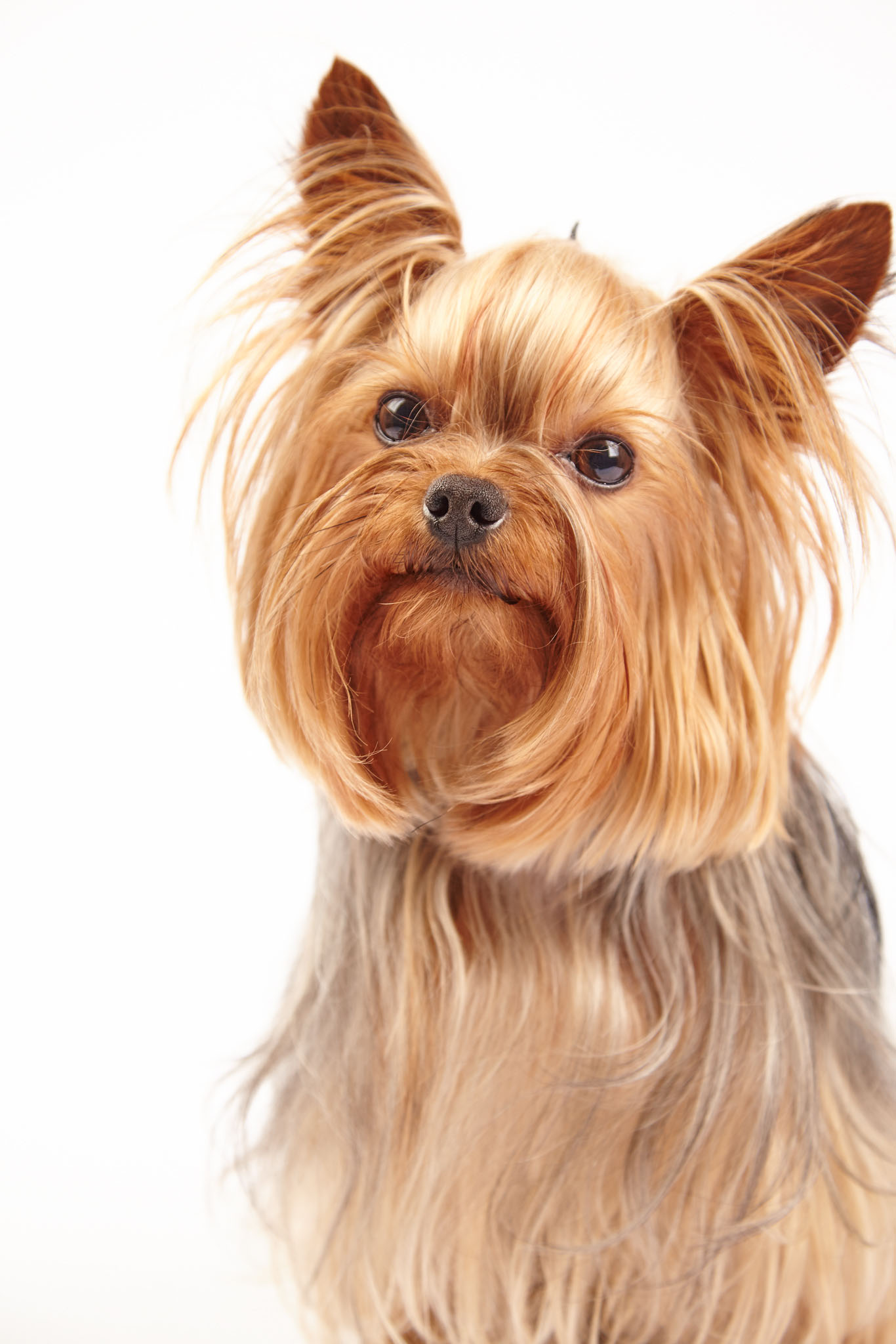 boprey-pet-photography-studio-nyc_25.jpg
