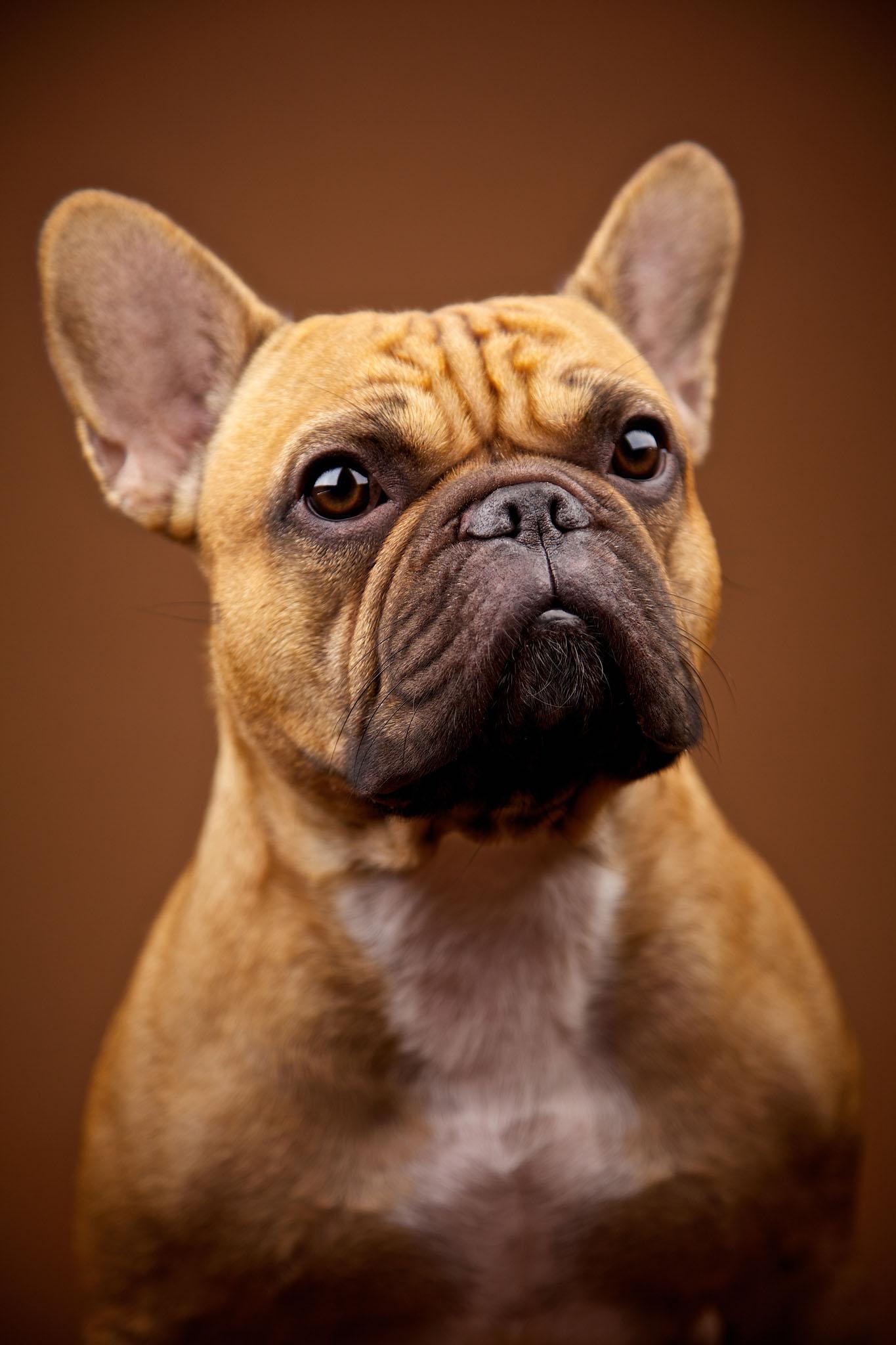 boprey-pet-photography-studio-nyc_27.jpg