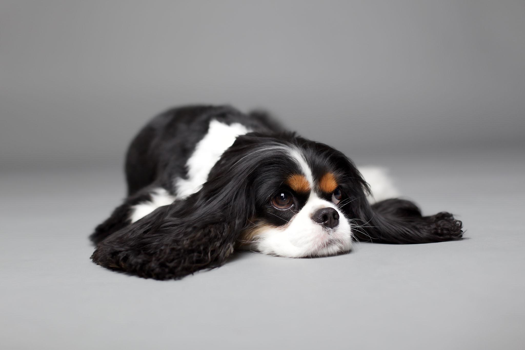 boprey-pet-photography-studio-nyc_28.jpg