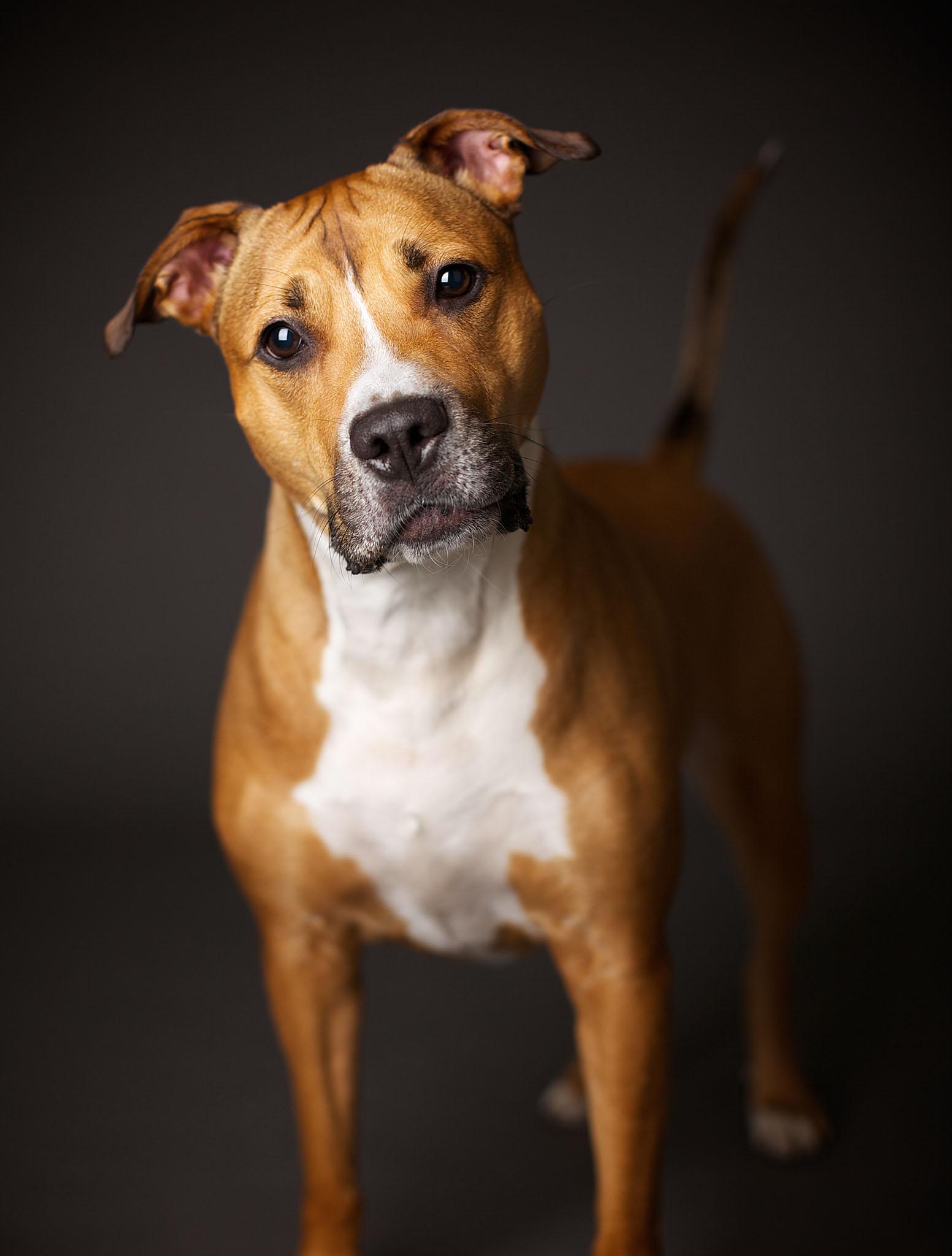boprey-pet-photography-studio-nyc_29.jpg