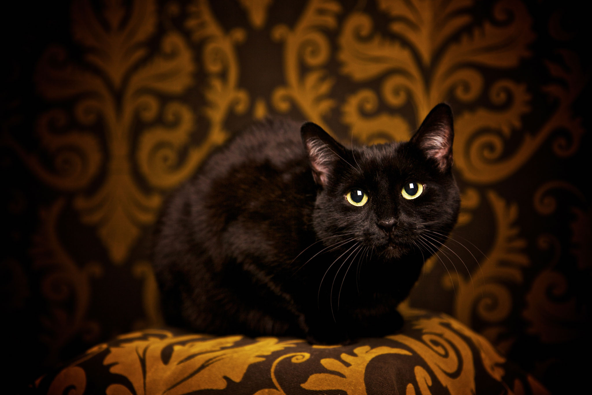 boprey-pet-photography-studio-nyc_30.jpg